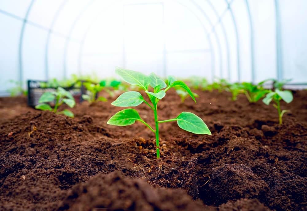 Plantas en un invernadero.