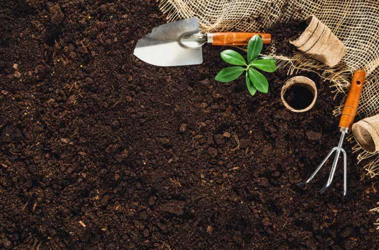¿Cómo preparar un huerto para el jardín?