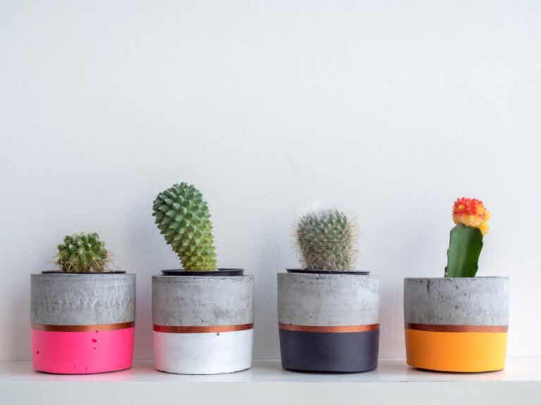 Consejos para elegir el recipiente ideal para tus plantas