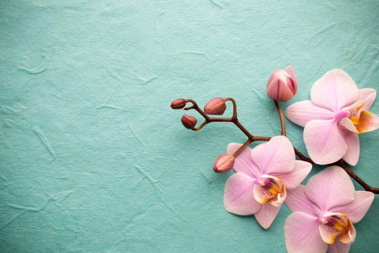 Las orquídeas tan exóticas como fascinantes