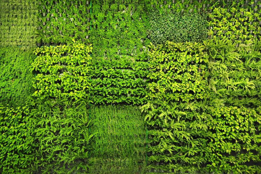 Maceteros y jardineras en el muro.