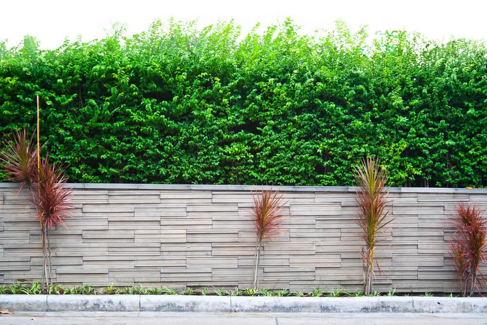 Muro del jardín.