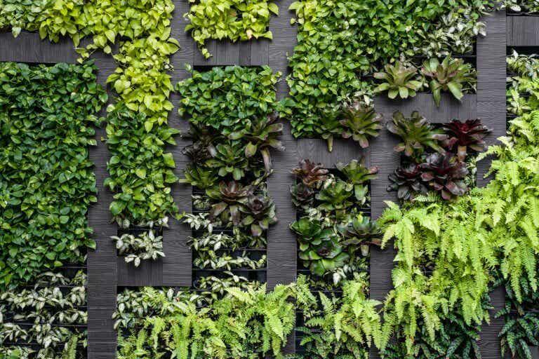 Tipos de muros para el jardín