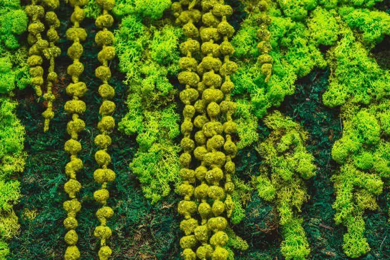 El uso del musgo para la decoración del hogar