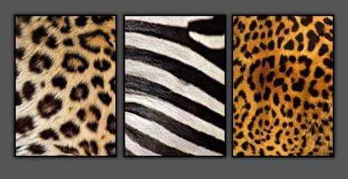 Cuadros de animal print.
