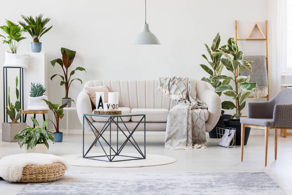 Las plantas: cuidados básicos para tenerlas más bonitas