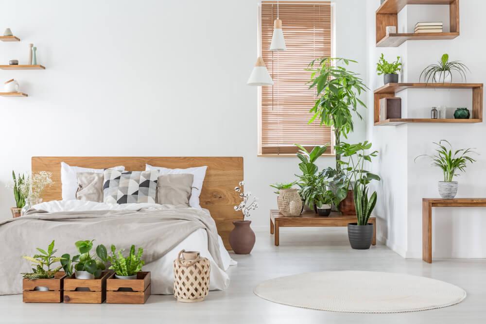 Plantas para un dormitorio zen.