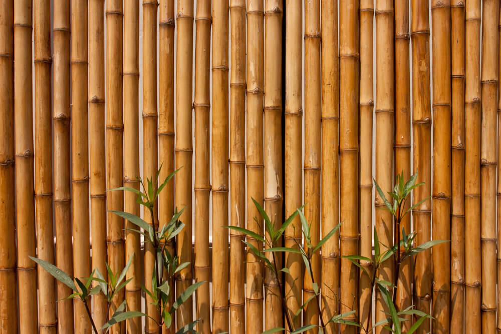 Valla de bambú.