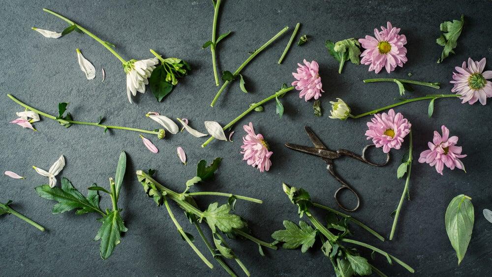 Flores cortadas.