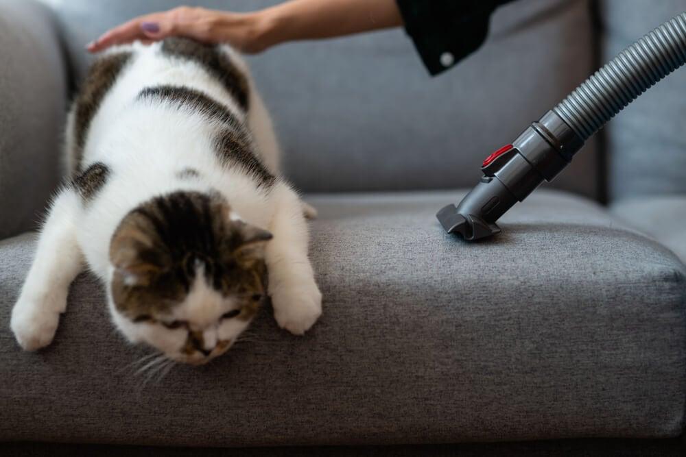 Limpiar los pelos de gato.