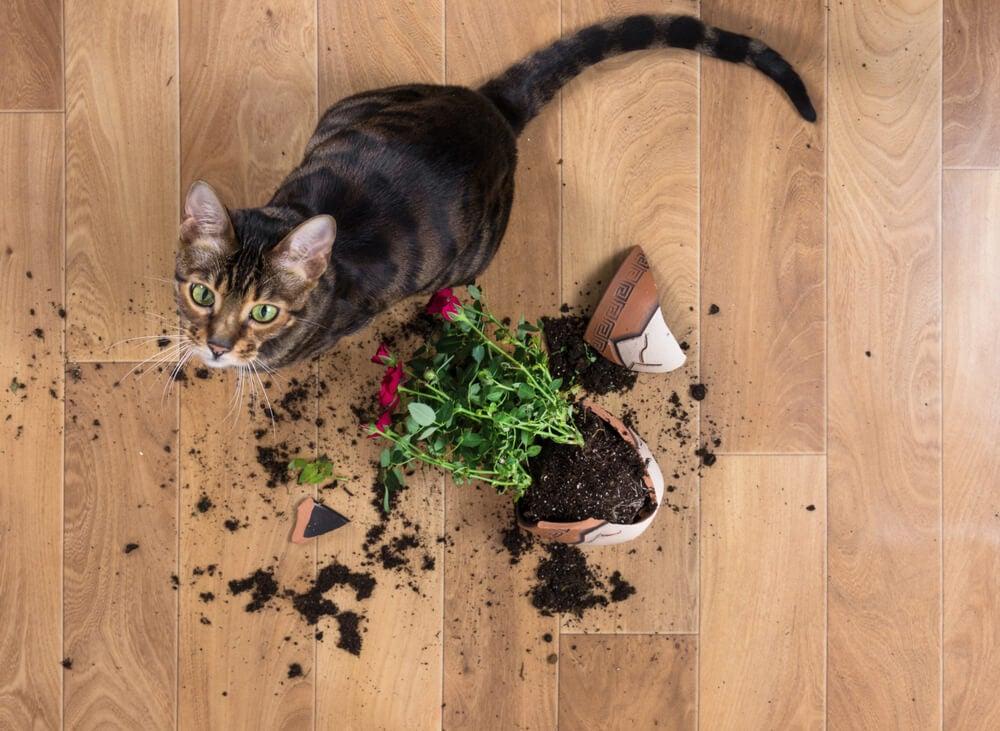 ¿Tienes mascotas? Hábitos diarios para tener la casa limpia