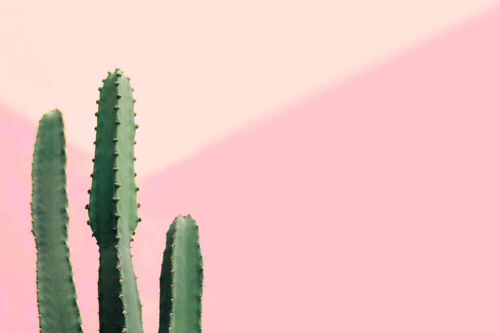 Cactus columnares.
