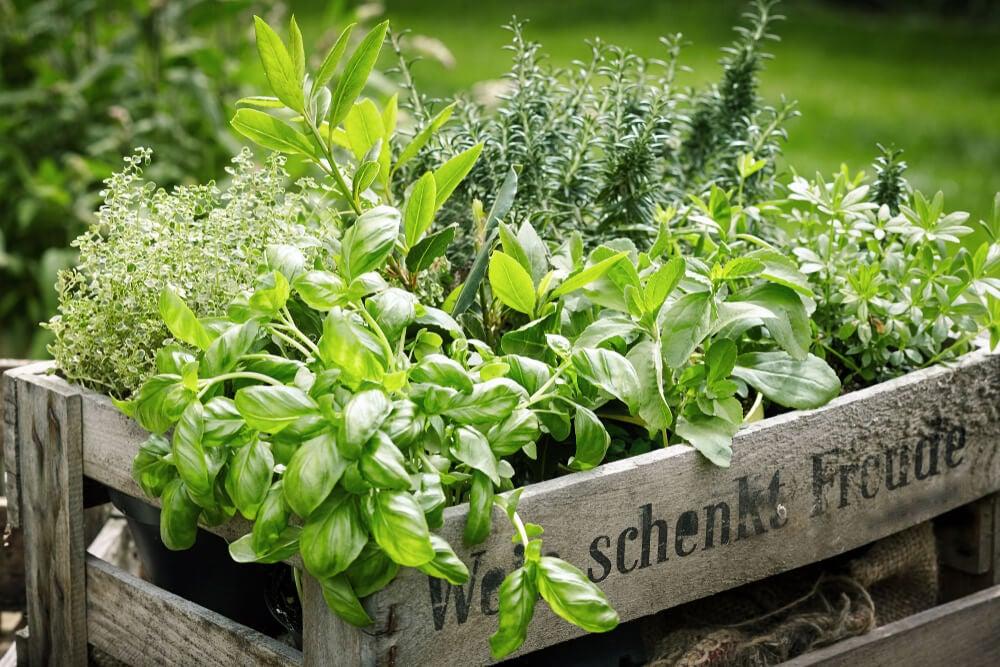 Maceteros de plantas aromáticas.