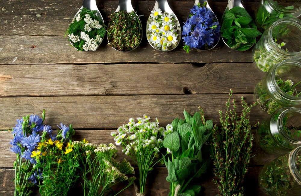 Plantas aromáticas.