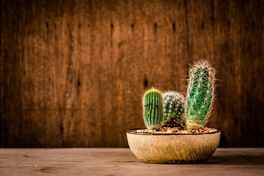 Tipos de cactus.