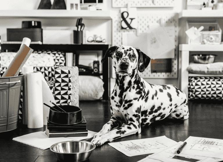 LURVIG 2.0 la segunda edición de la colección para mascotas de Ikea