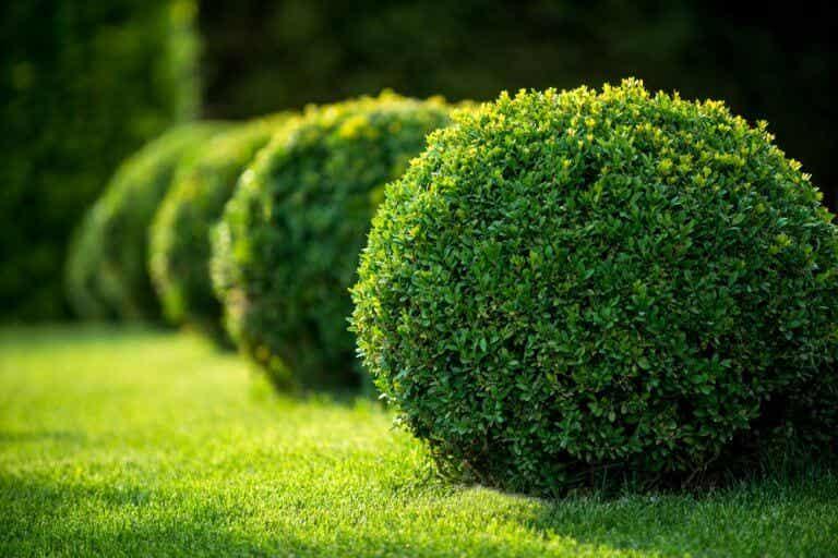 Los arbustos: dale juego a tu jardín