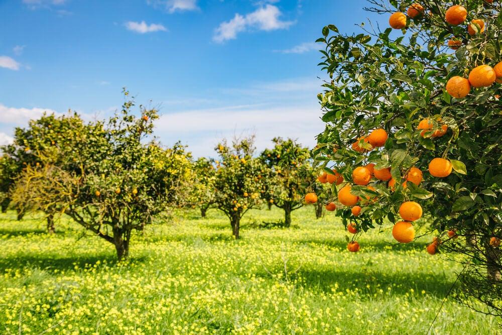 Árboles frutales en un jardín de campo