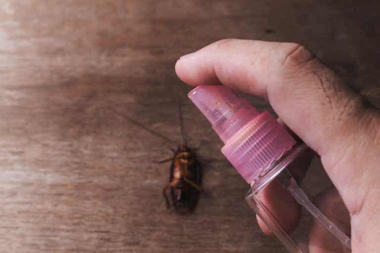 5 fórmulas para deshacerte de los insectos en el hogar