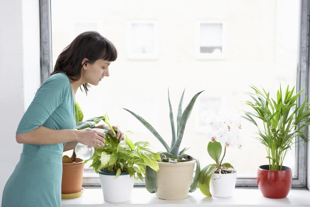 Técnicas para regar correctamente tus plantas