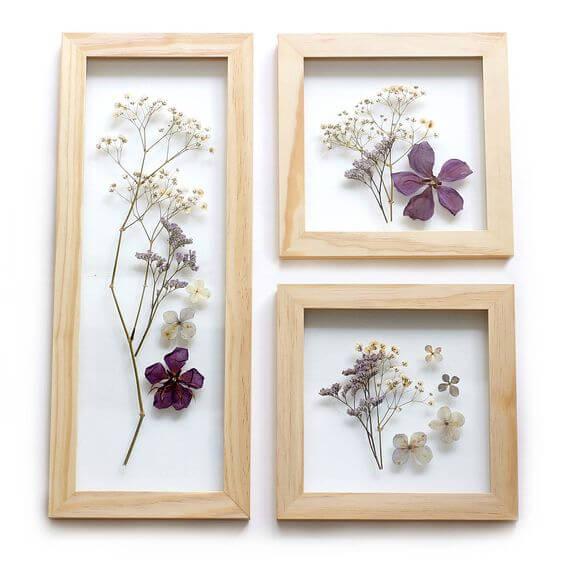 Flores secas prensadas