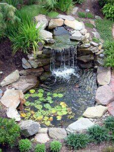 Tipos de estanques y plantas