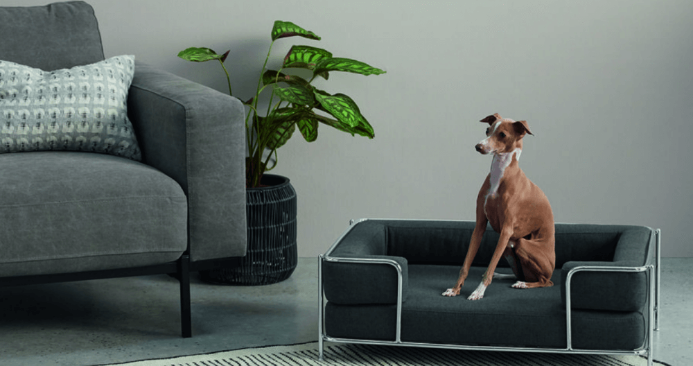 Mobiliario para tu mascota: sofás para perros