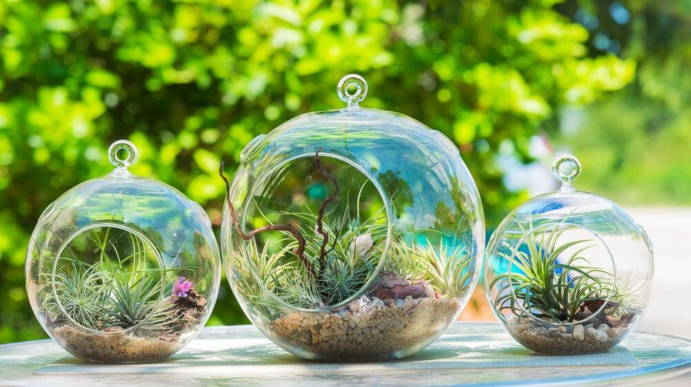 Urnas y mini invernaderos