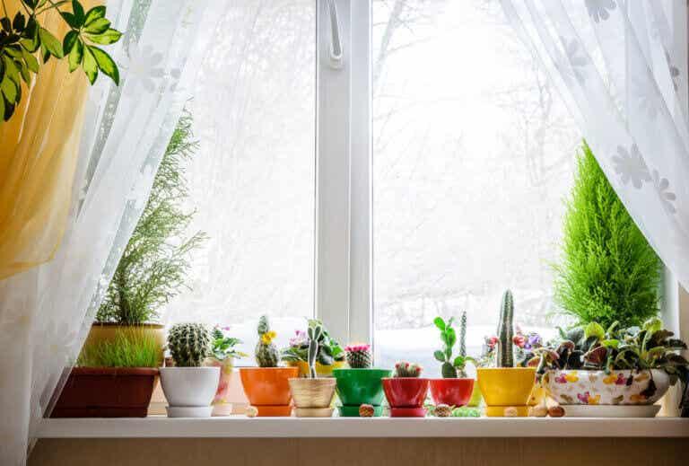 ¡Vamos a decorar nuestras ventanas!