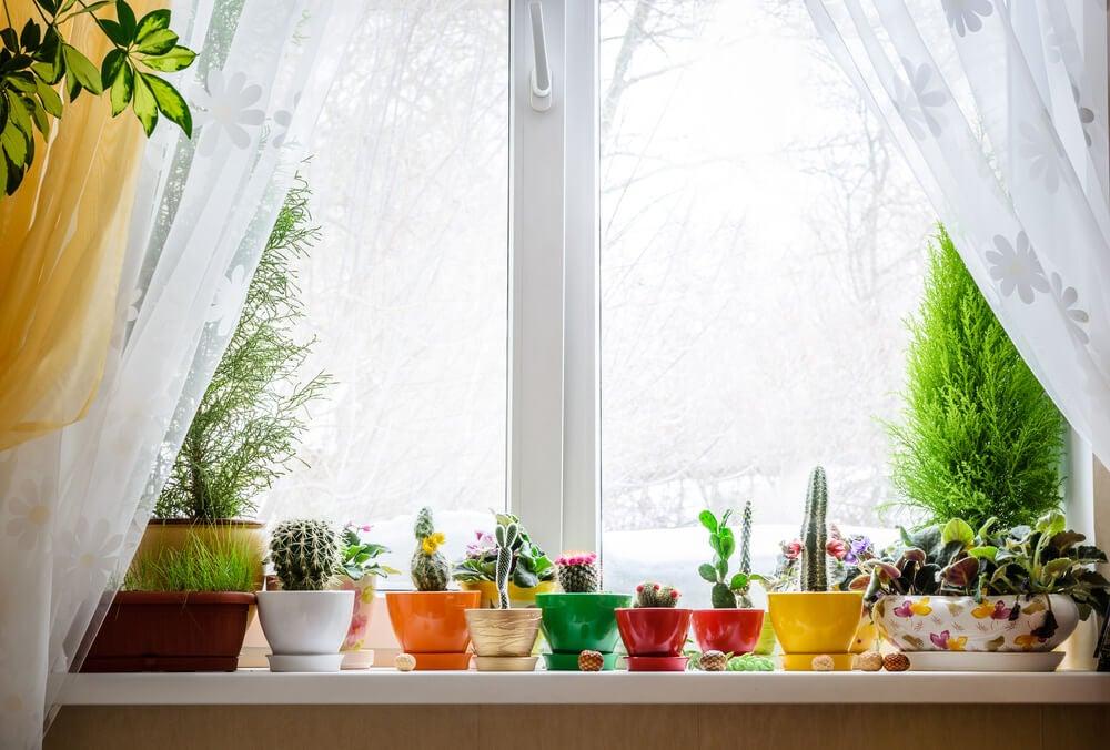 Decorar las ventanas con plantas
