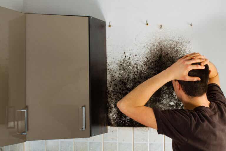 ¿Cómo afecta la humedad a la ropa del armario?