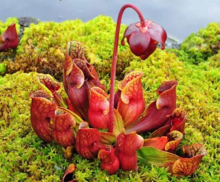 Plantas carnívoras para la decoración del hogar