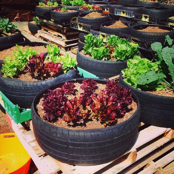 llenar de encanto tu jardín: huerto urbano