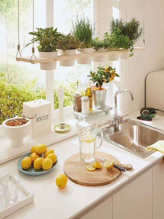 Plantas colgantes en la cocina