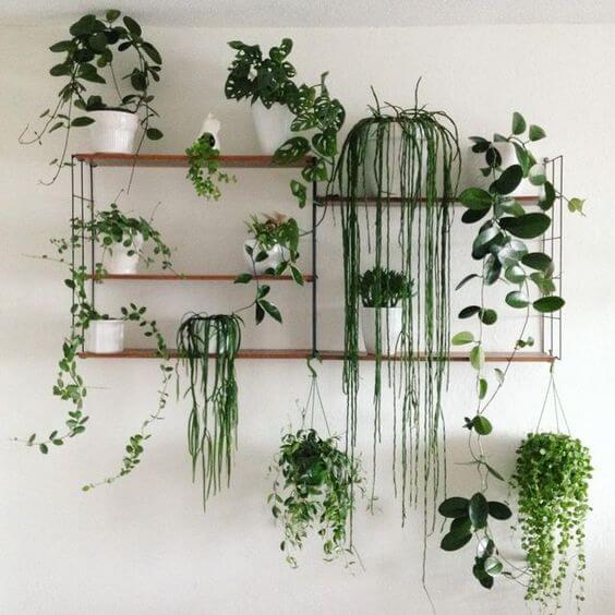 Plantas colgantes en vergel