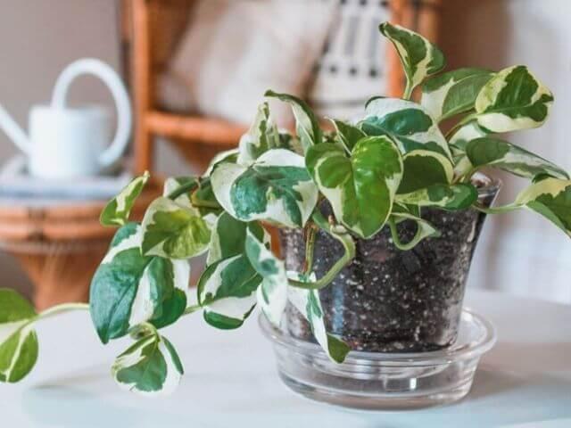 Clases de botánica: estas son las plantas que debes conocer