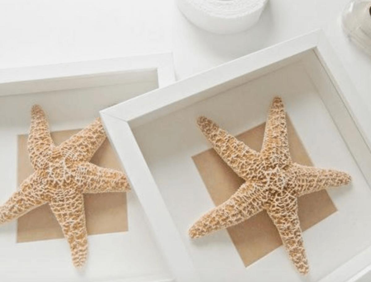 DIY cuadro con estrella de mar