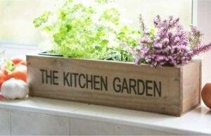 Llena de plantas aromáticas tu cocina