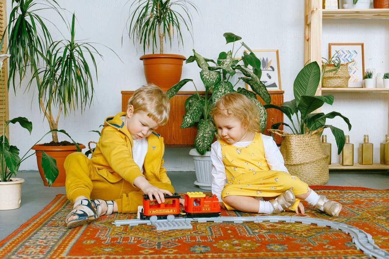 plantas para purificar el aire de tu casa