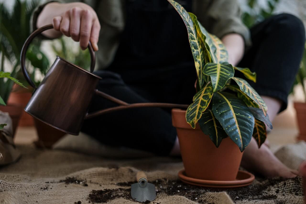 Así puedes recuperar una planta con exceso de riego