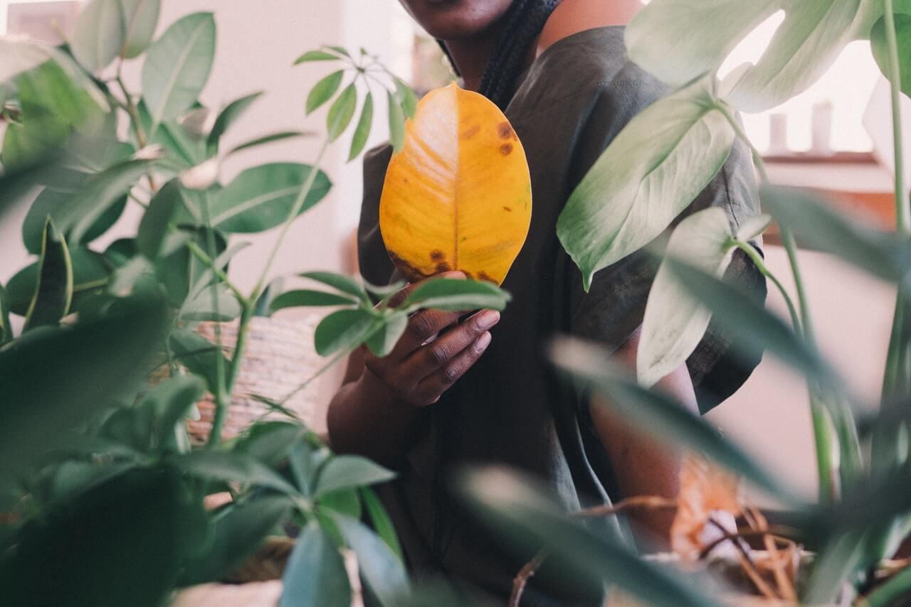 Problemas que genera la calefacción sobre las plantas