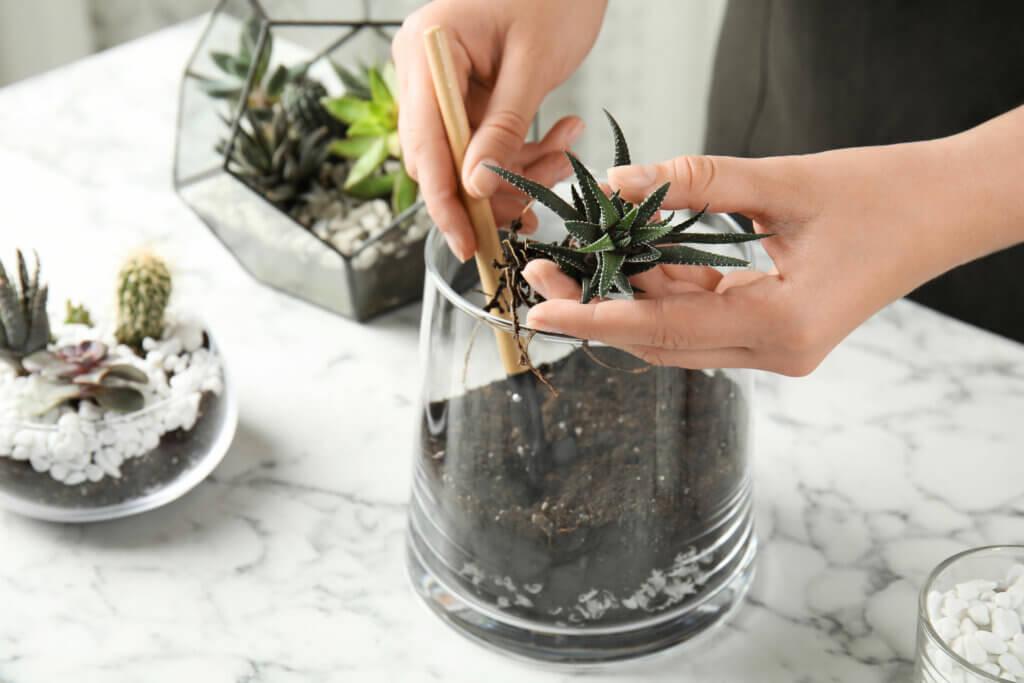 Aprende a hacer tu propio terrario de suculentas y cactus