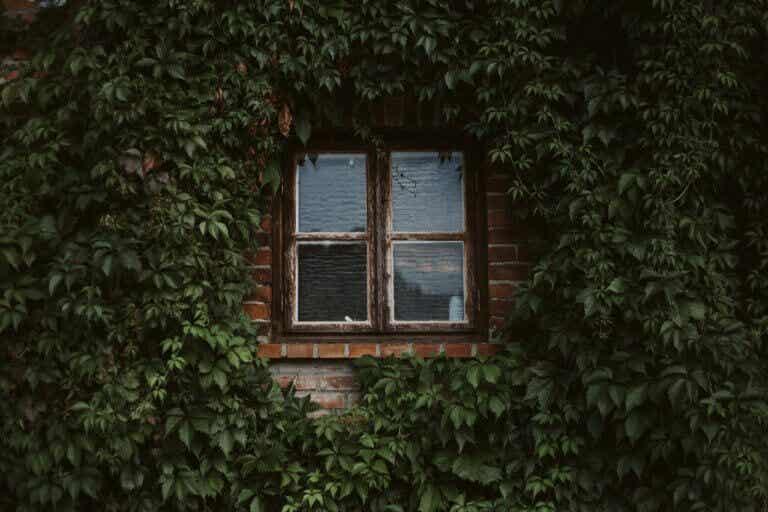 Llena de enredaderas tu hogar. ¡Aprende a cultivarlas!