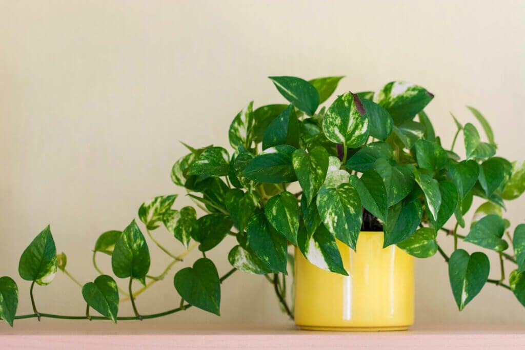 Plantas en altura para ornamentar los interiores