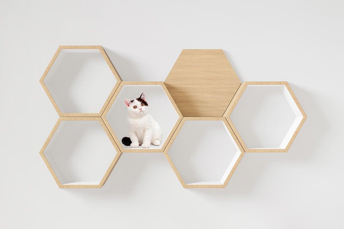 Estanterías modulares para gatos.