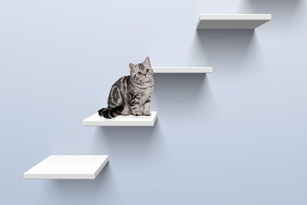 Estanterías para gato tipo escalera.