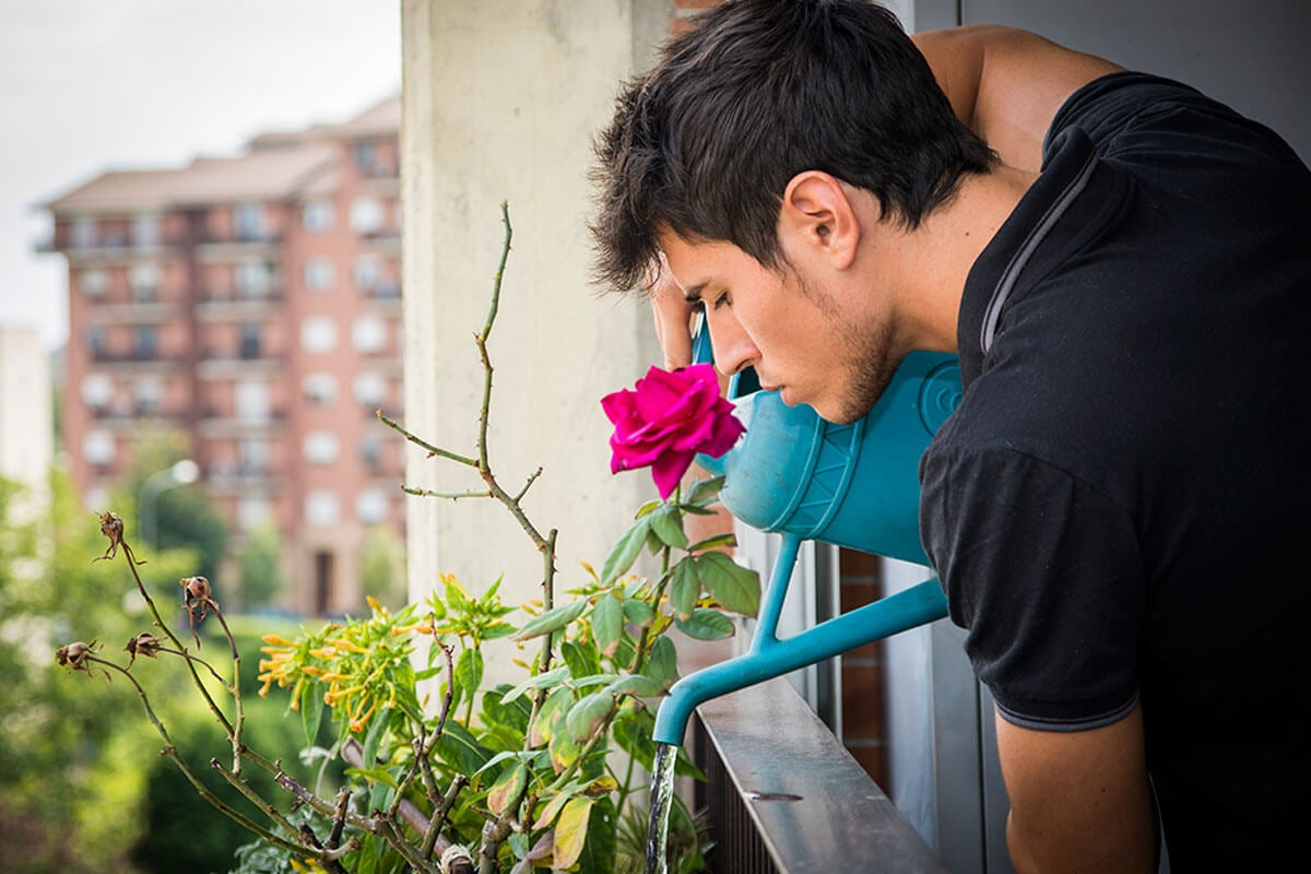Roses need constant watering.