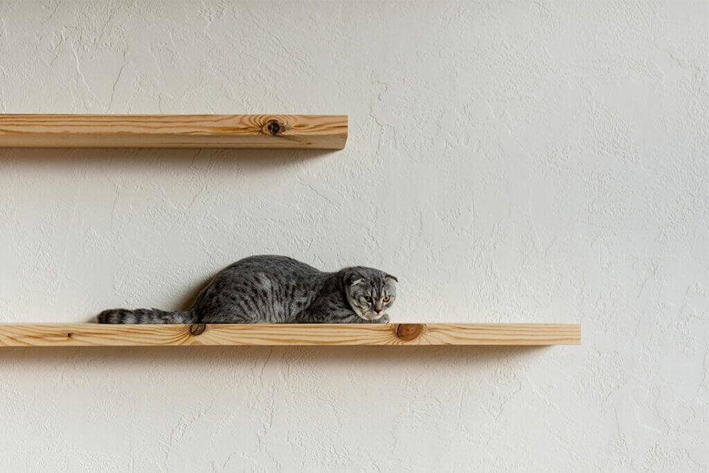 Estanterías para gatos: espacios felinos decorativos