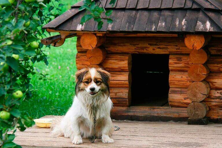 Pinta y renueva la casa de tu perro