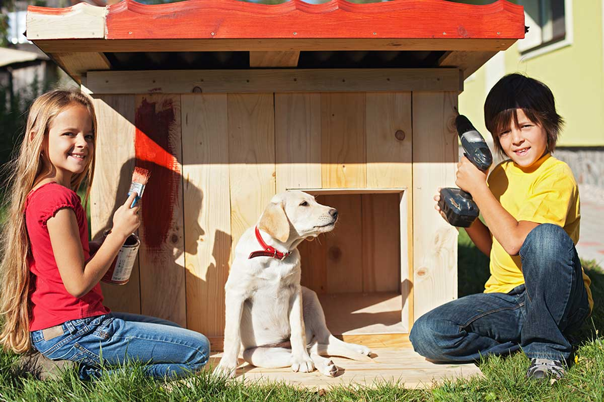 Prepare the wood for your dog's house.